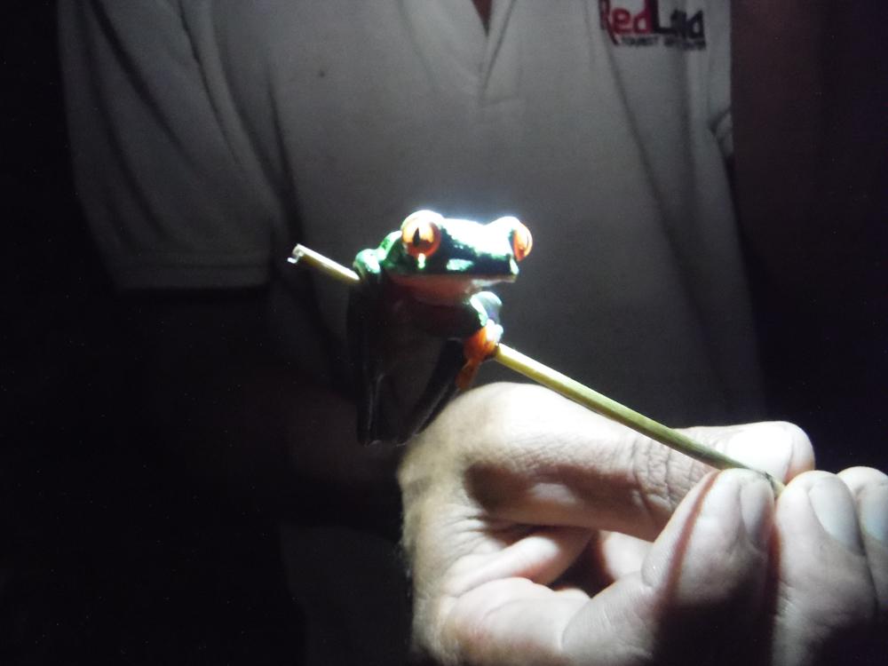 imprescindibles en Costa Rica