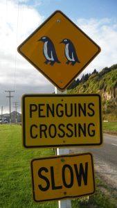 Visitar Nueva Zelanda