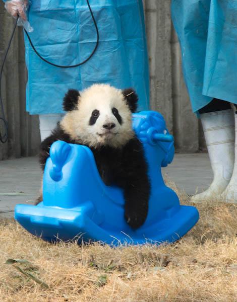 Panda en China