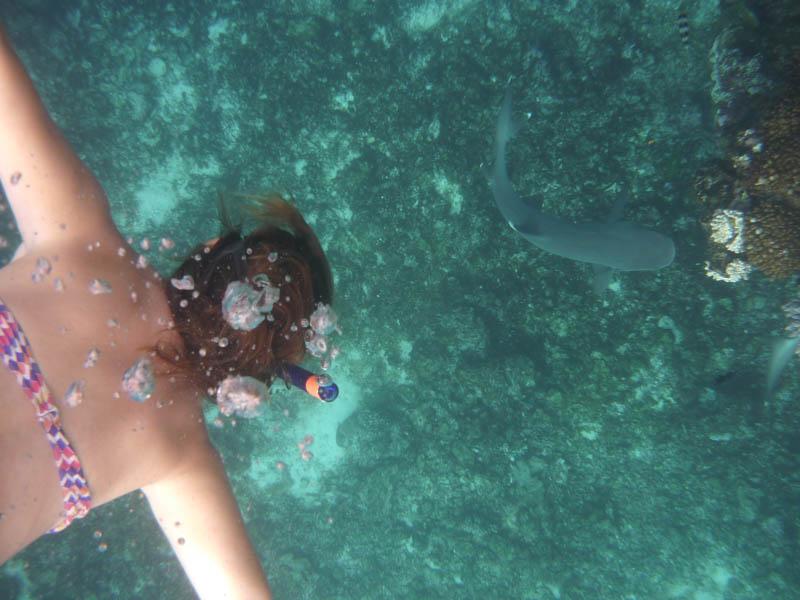 nadando con tiburones en Kuata Natural Resort