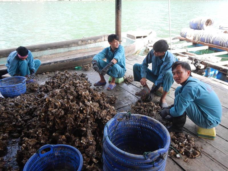 pescadores en Bahía de Halong