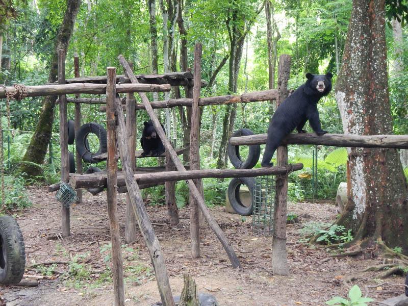oso en un parque en Laos