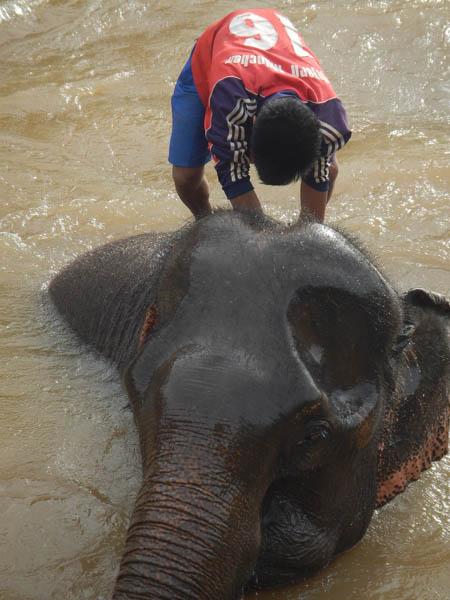 bañañndo un elefante en Laos