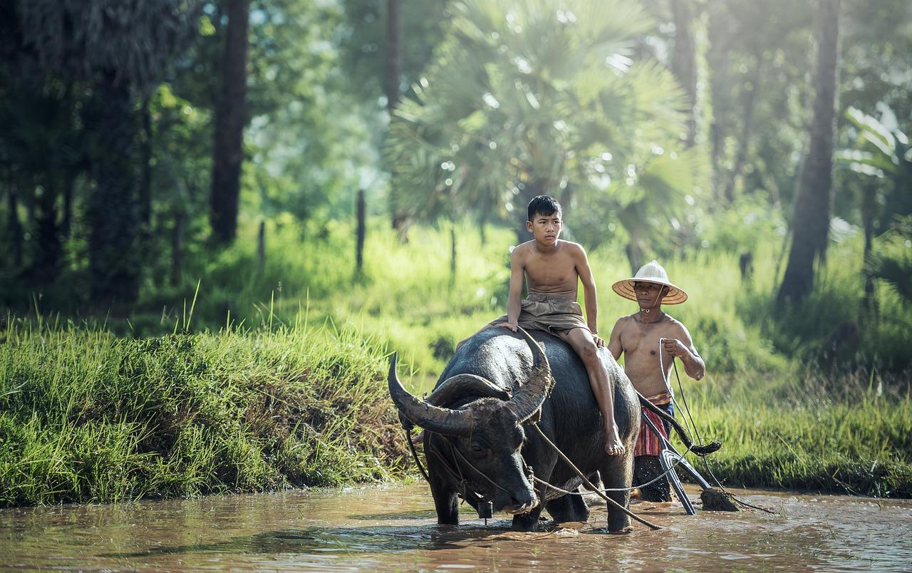 Camboya en elefante