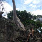 Naturaleza en los templos de Angkor