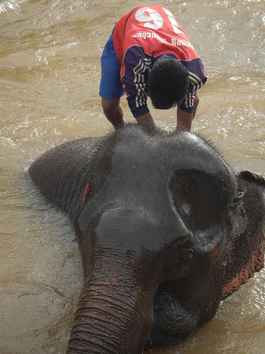 Elefantes en Tadlo