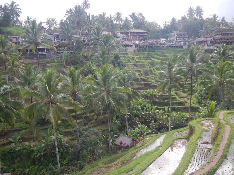terrazas en Bali
