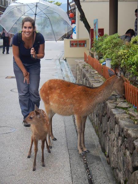 ciervos en Nara