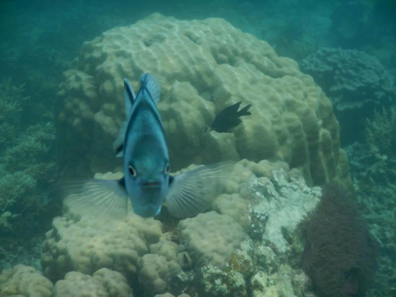 pez, buceando en Malasia