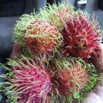 Fruta asiática