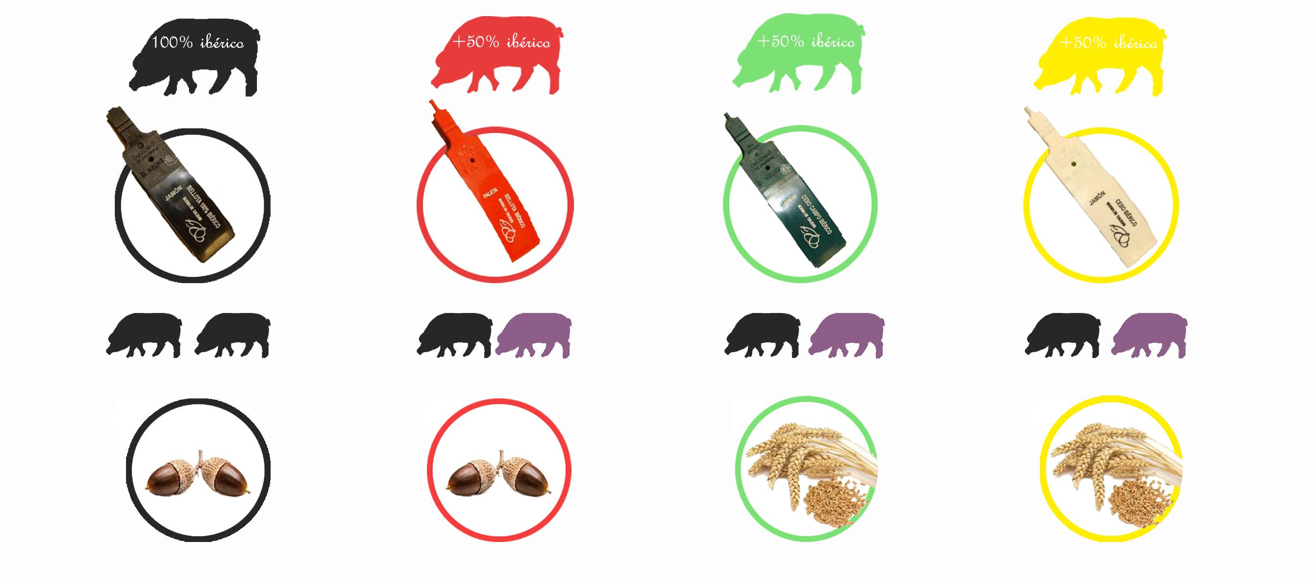 Tipos de etiquetado del jamon