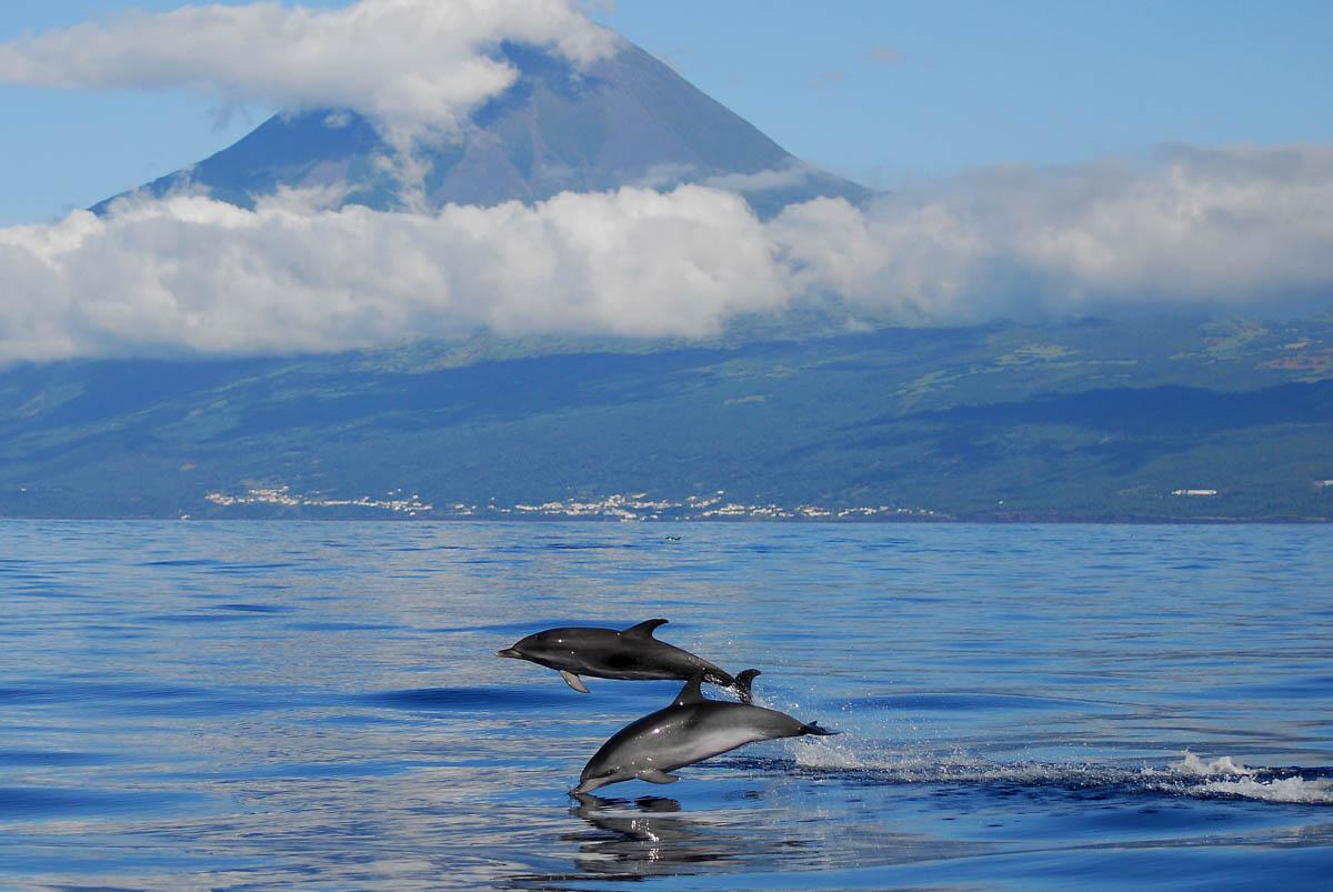 Observacion de delfines en Azores