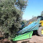Campos de olivos de Jaen