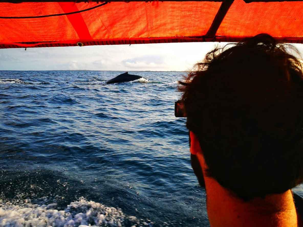 JP y una ballena de fondo