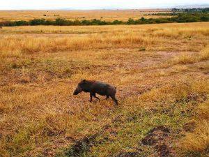 Que visitar en Kenia