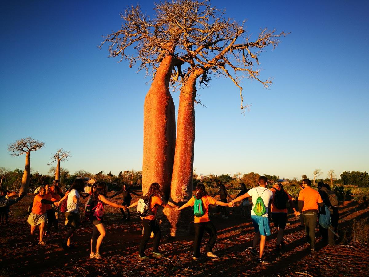 Todos juntos con los baobas