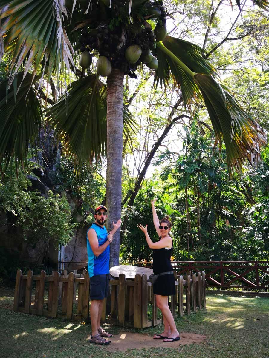 Coco tipico de Seychelles