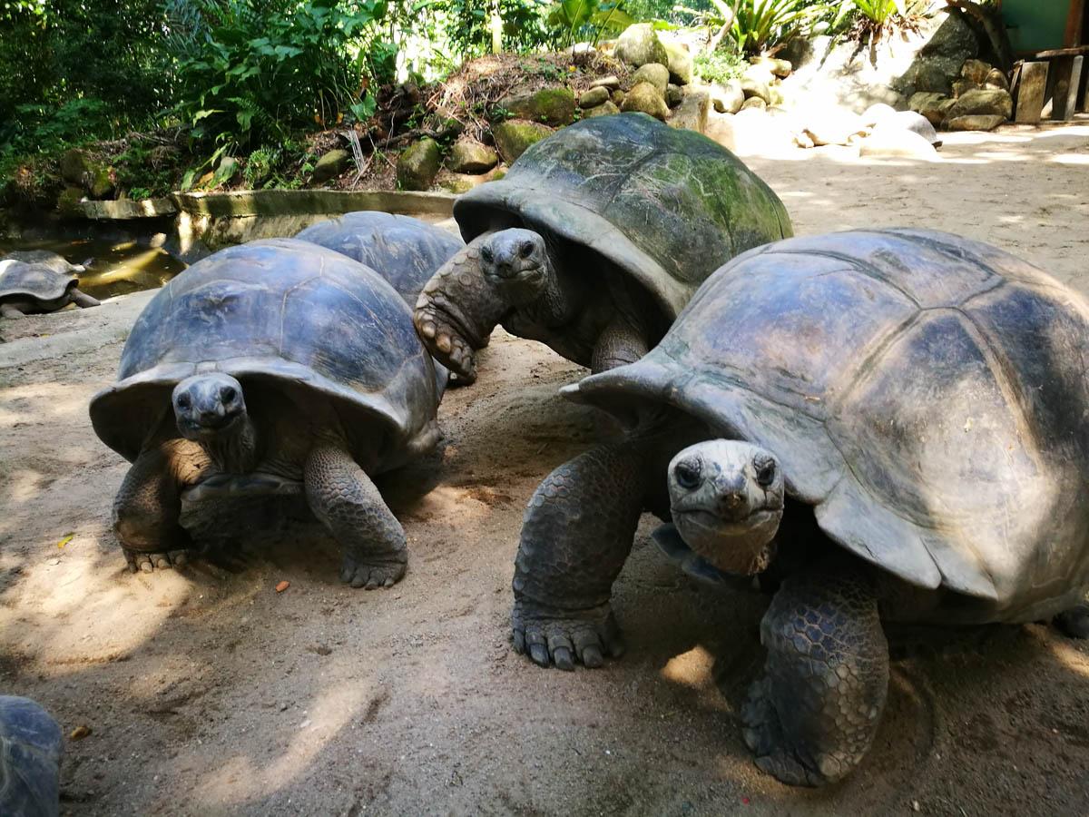Tortugas de Seychelles