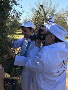 Fotografiando el olivar
