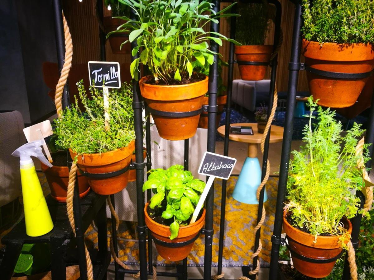 Plantas aromaticas Novotel