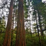 Que ver en Vancouver: Pasarelas en Capilano