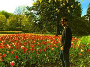 Tulipanes en Ottawa