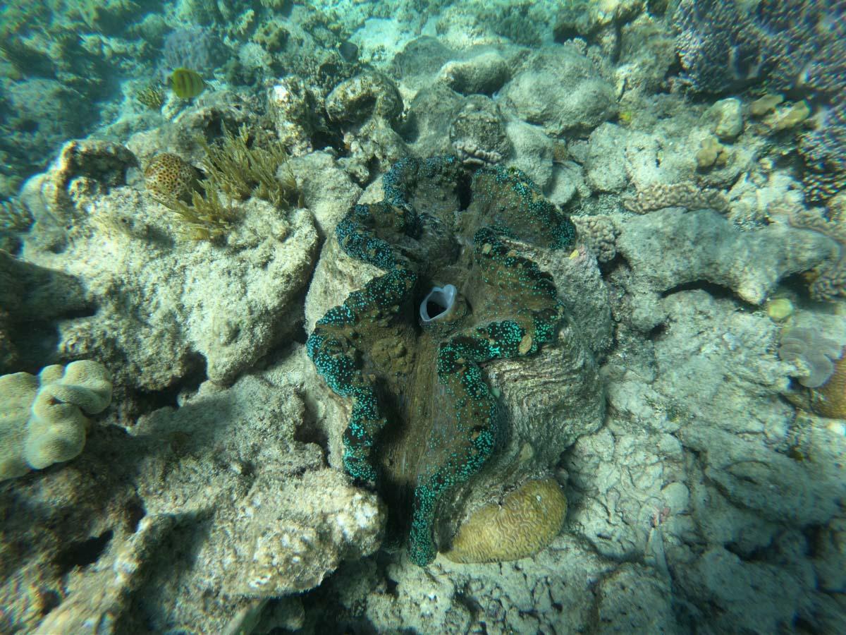 Visitar la Gran Barrera de Coral