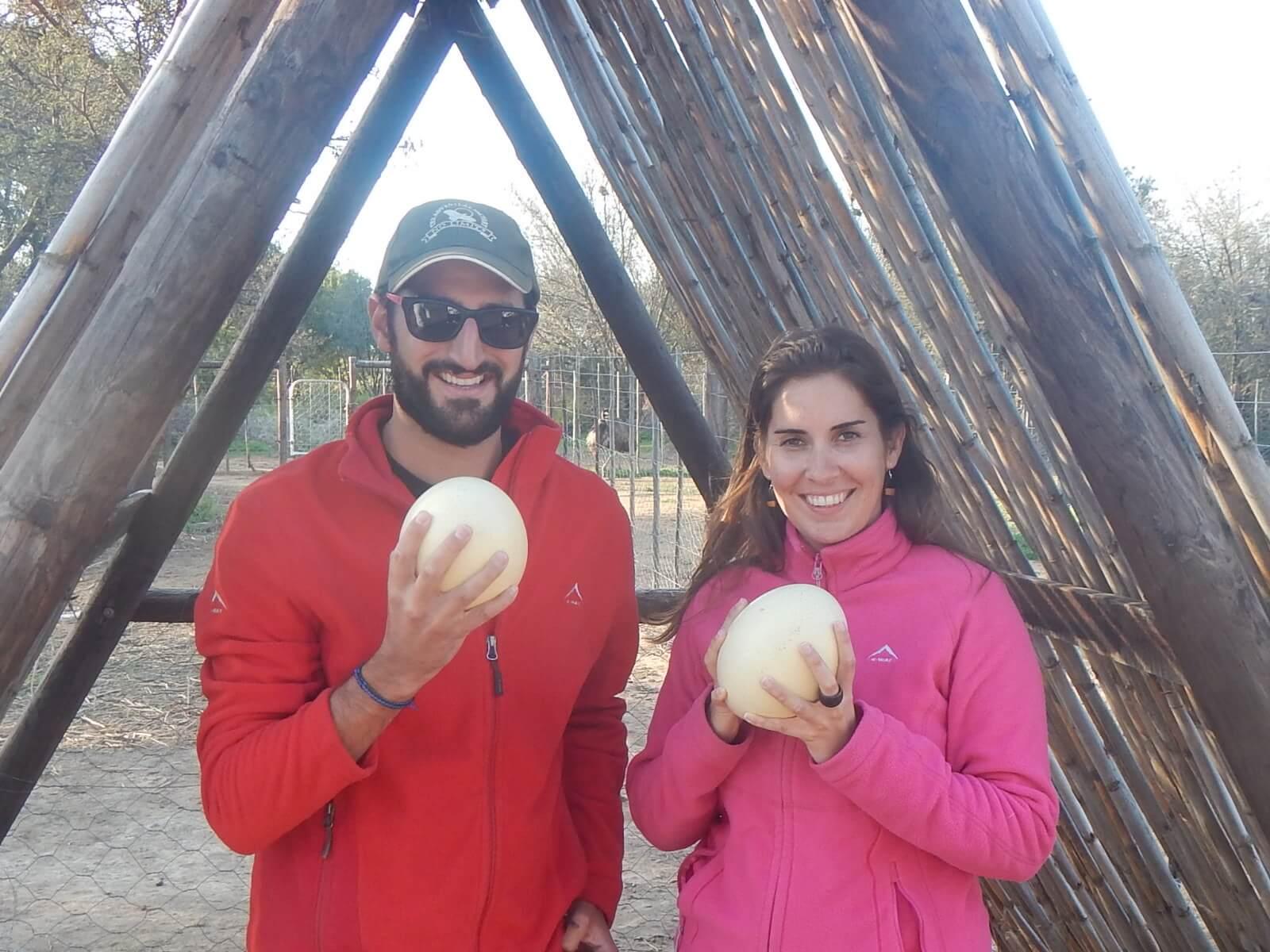 Huevos de avestruz en Sudafrica