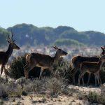 Que visitar Doñana