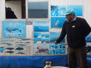 Ver ballenas en Sudáfrica