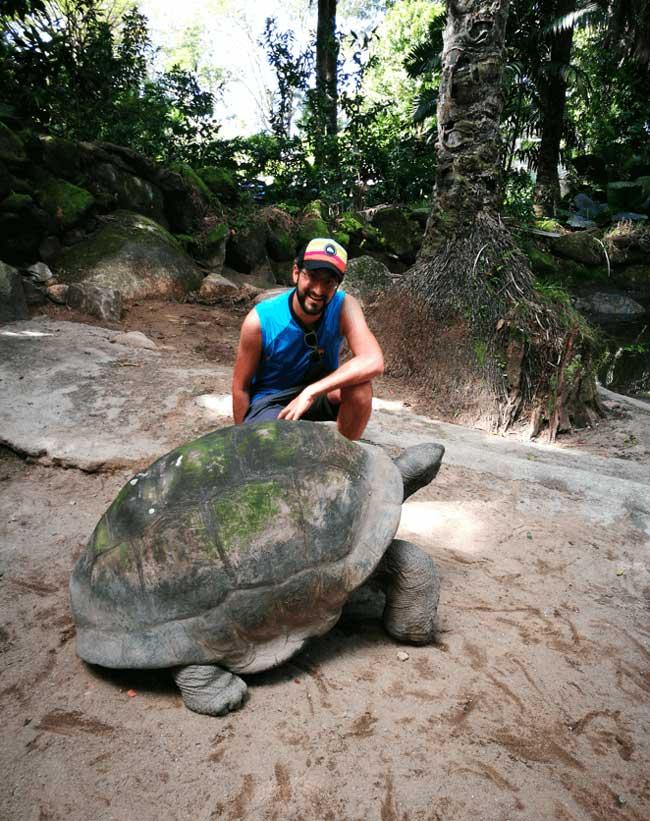 Tortugas gigantes de Seychelles